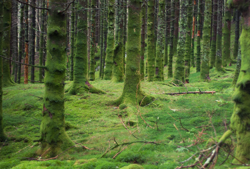 Mossy trees and woodland