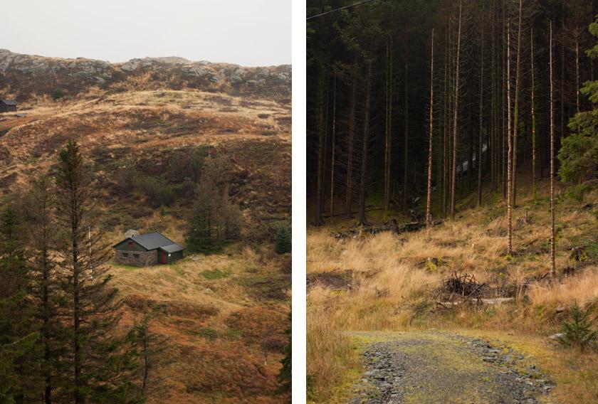 Shingle mountain trail