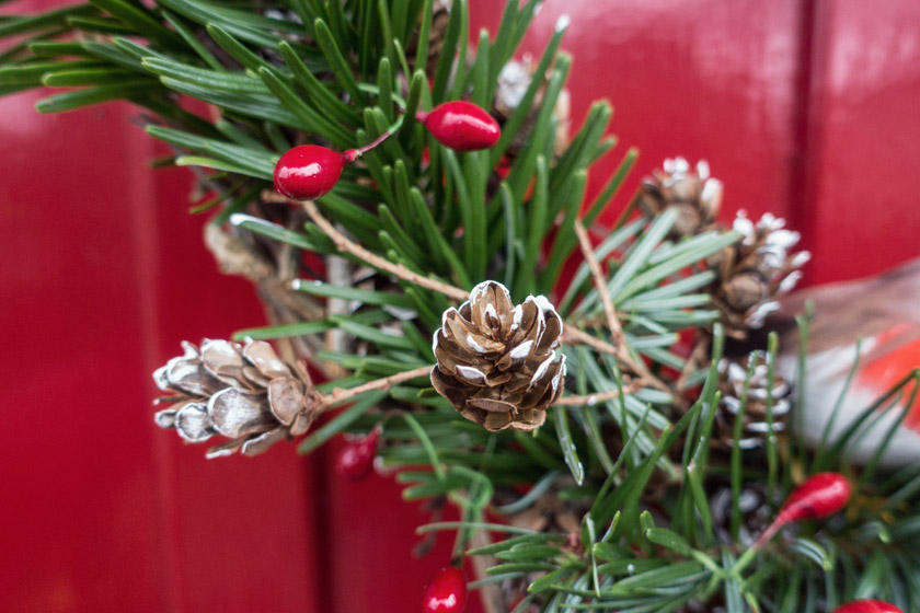 Closeup of pinecones and spruce