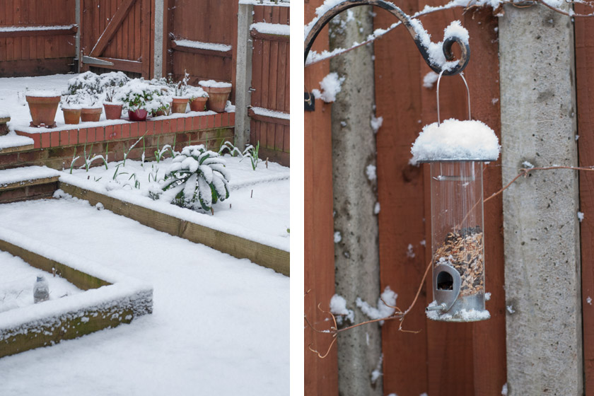 Snow covered back garden