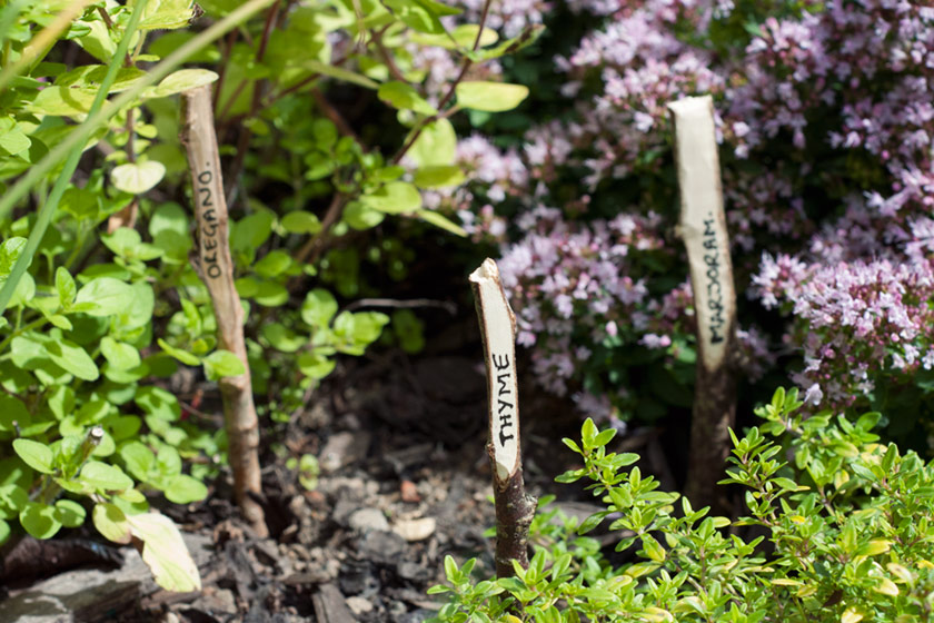 Plant markers in herbs