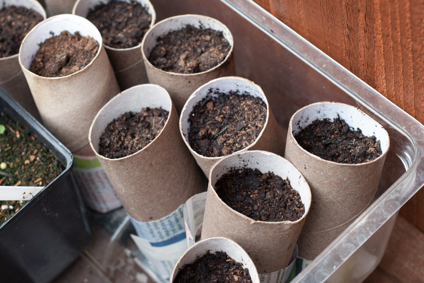 Toilet rolls as seed trays