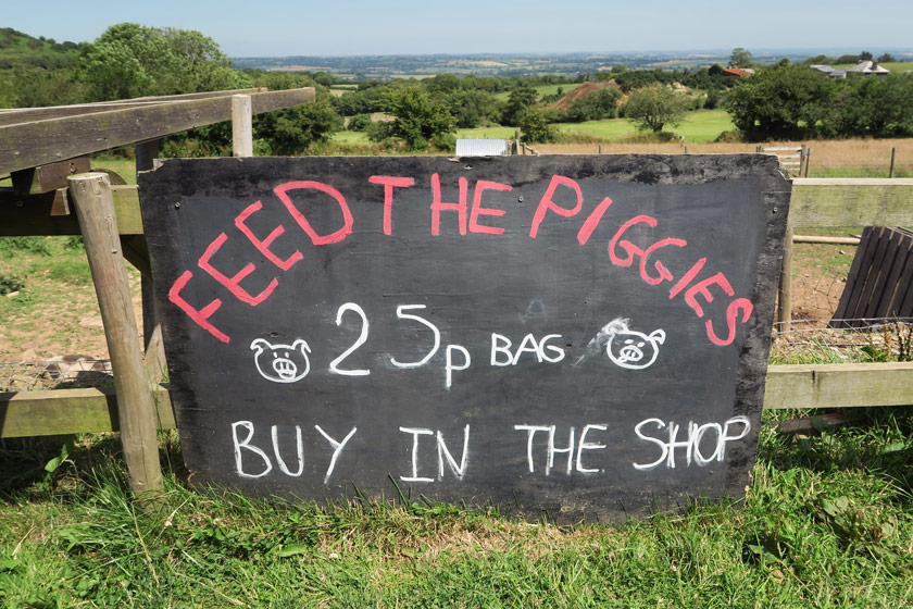 Feed the pigs sign