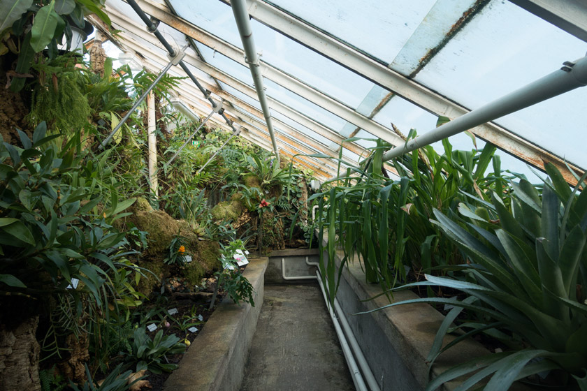 View inside glasshouse