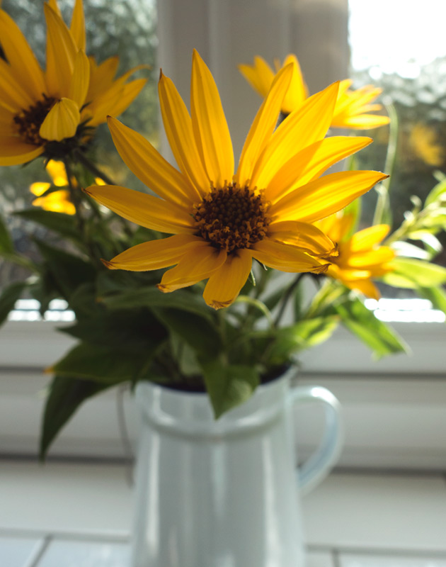 Yellow flowers in jug