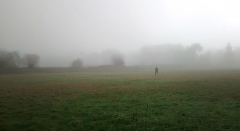 Foggy meadow view