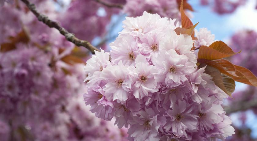 blog_blossom