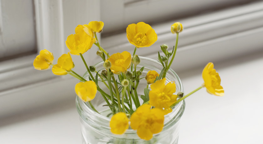 Yellow buttercups in jam jar