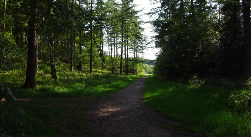 Chawton Park Woods