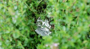 Tin foil nestled into plant