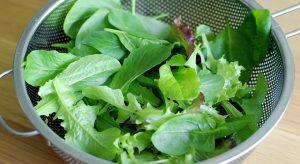 Colander of picked salad leaves