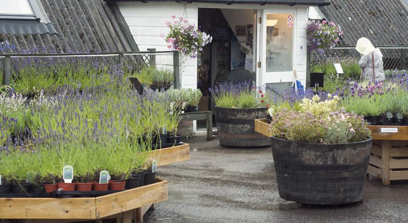 Lavender fields shop