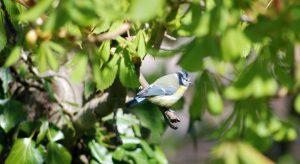 Blue tit sitting in tree