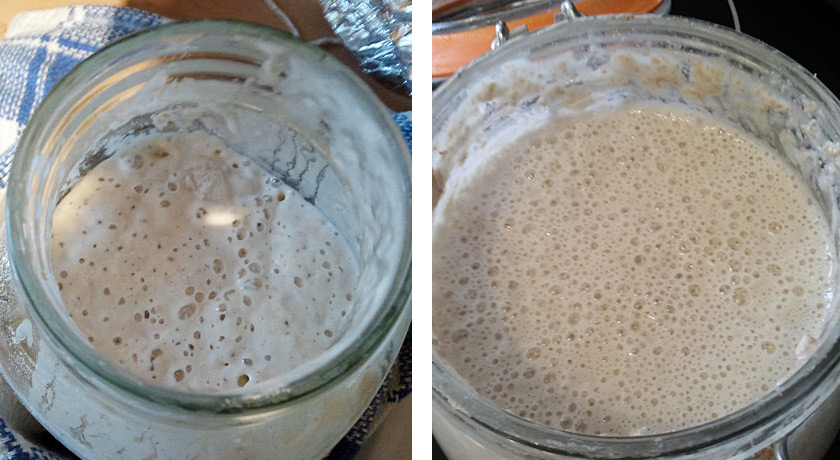 Two jars of leaven for comparison