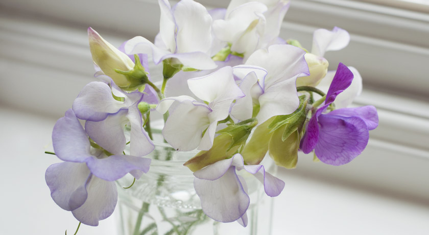 Jar of sweet pea flowers