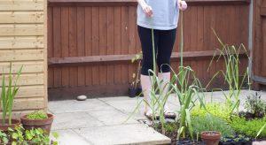 Tall garlic shoots