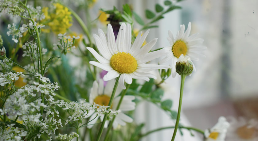 Daisies in wild flower bouquet