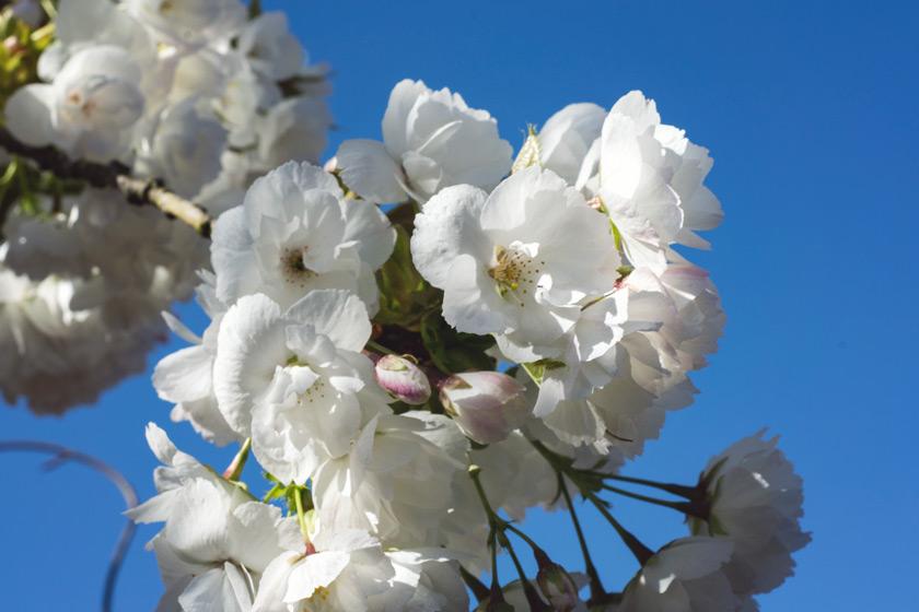 Closeup of white blossom