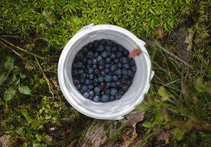 Pot of blueberries