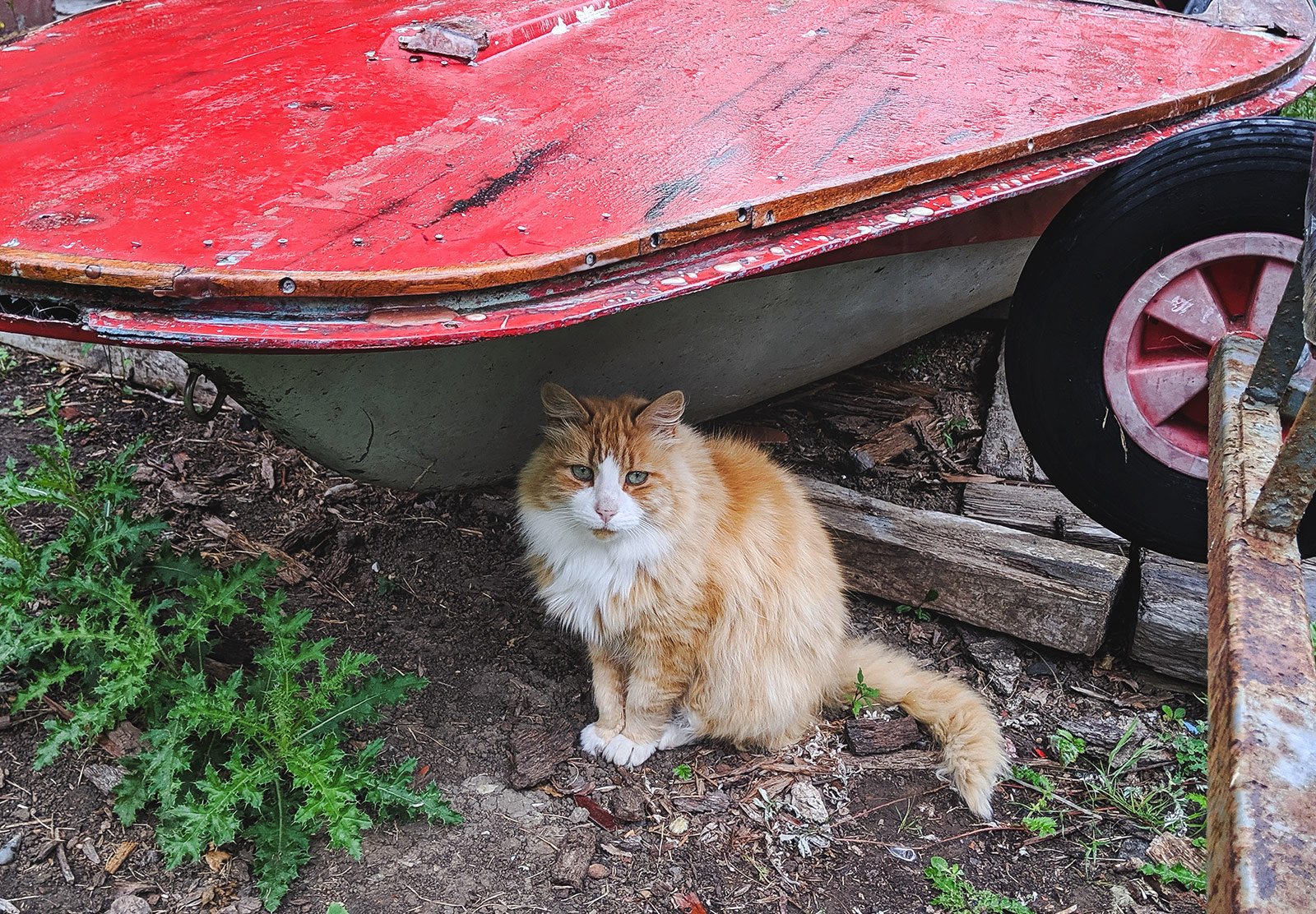 Cat sat under red boat
