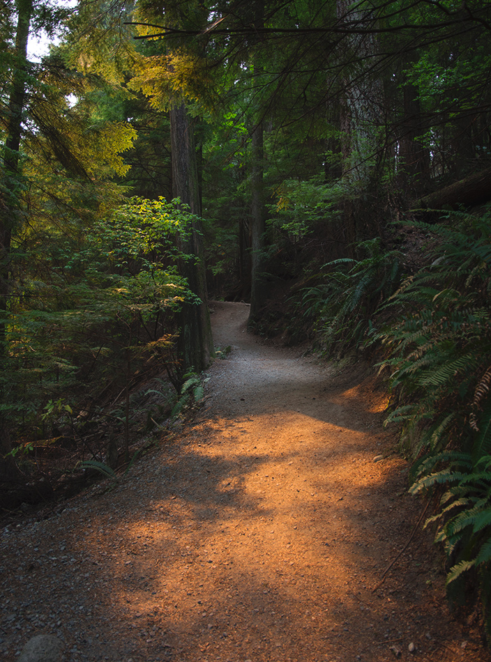 Orange light on dirt trail