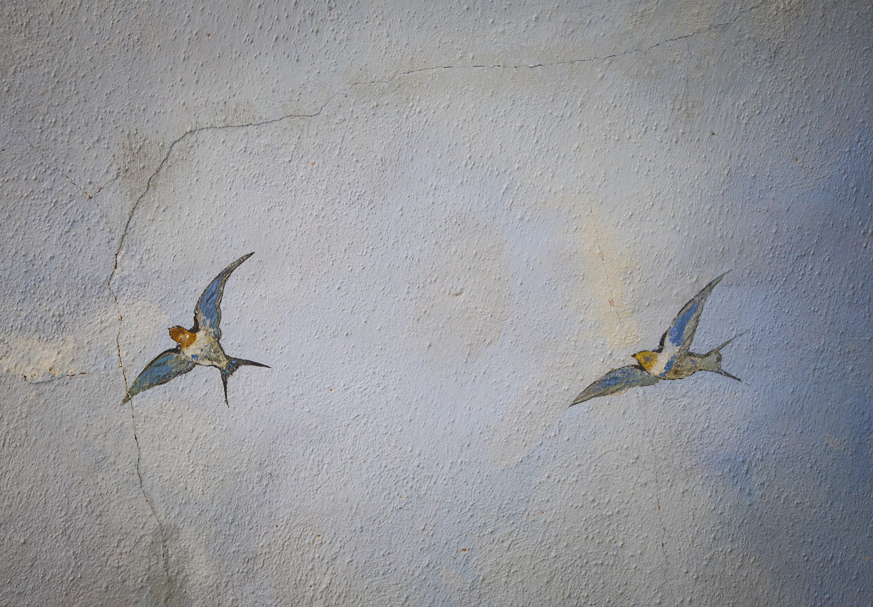 Painted swallows