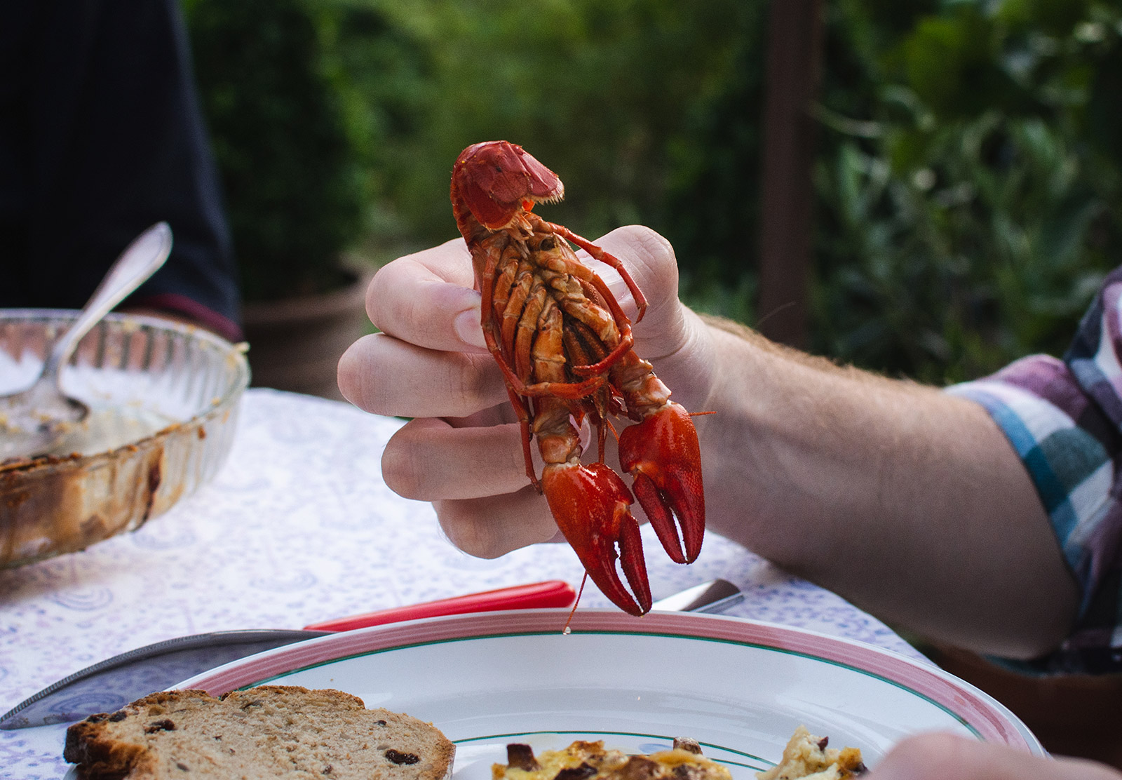 Crayfish belly