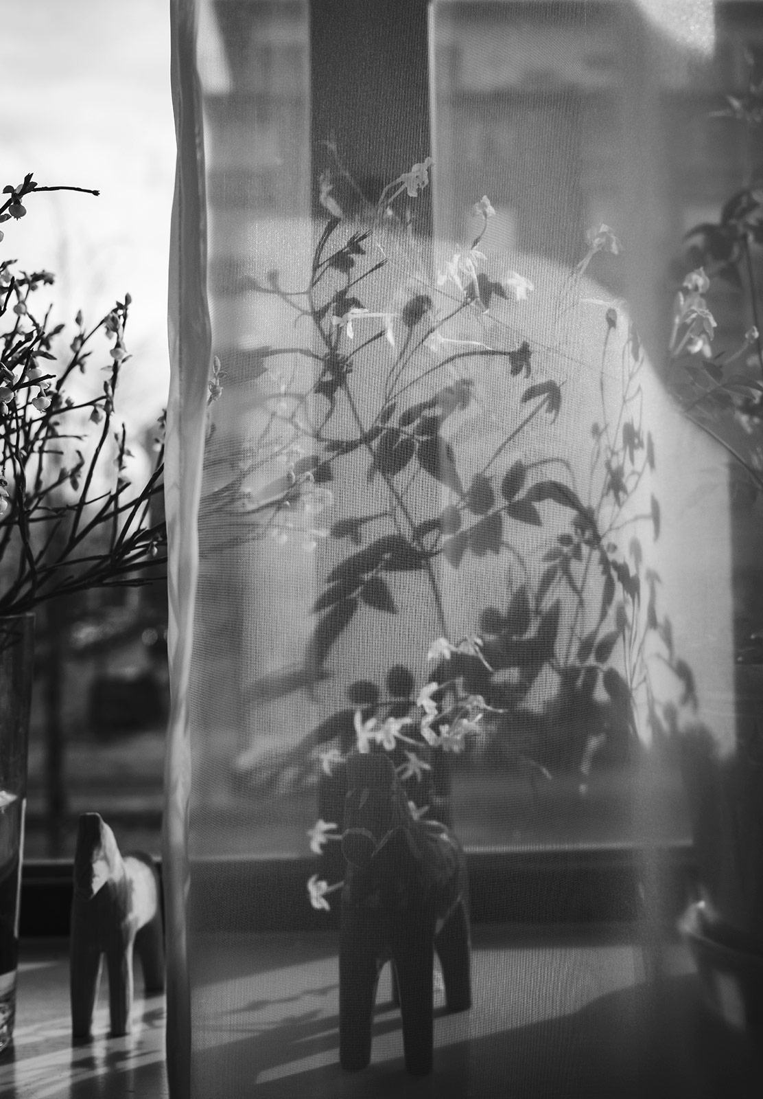 Plant silhouette on curtain