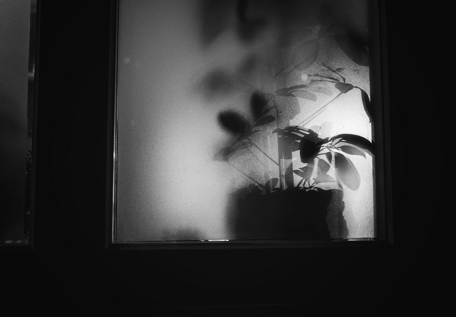 Plant silhouette through window