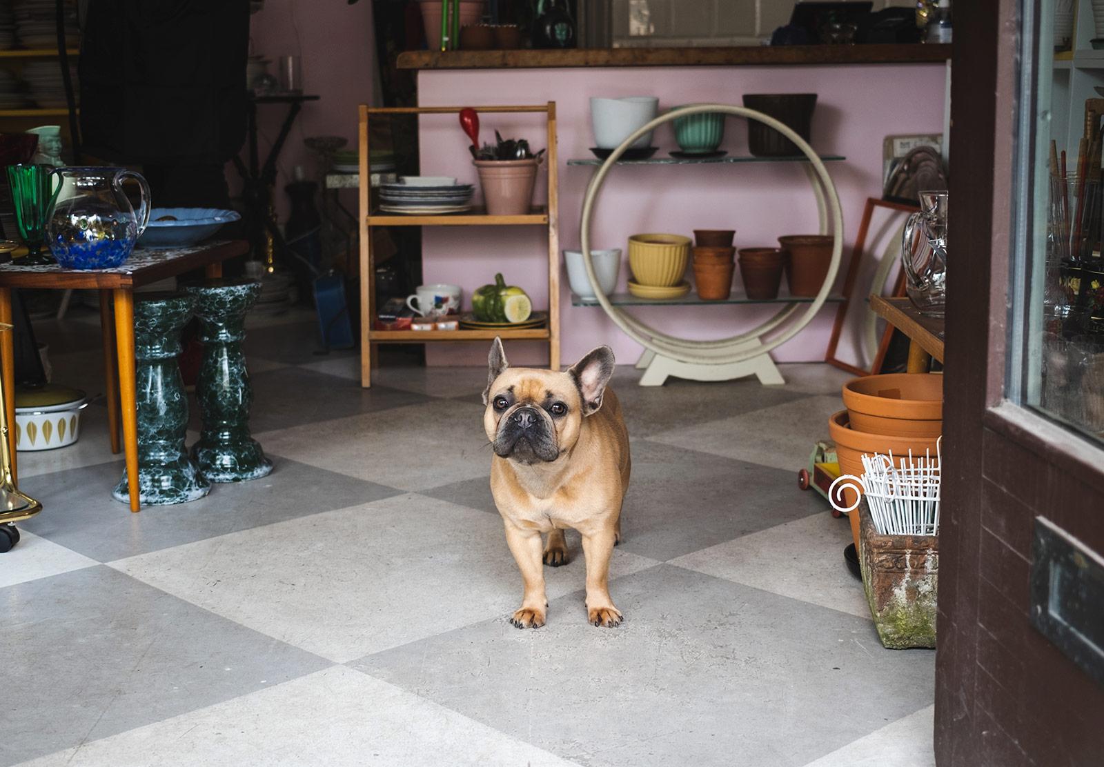 Dog in shop doorway