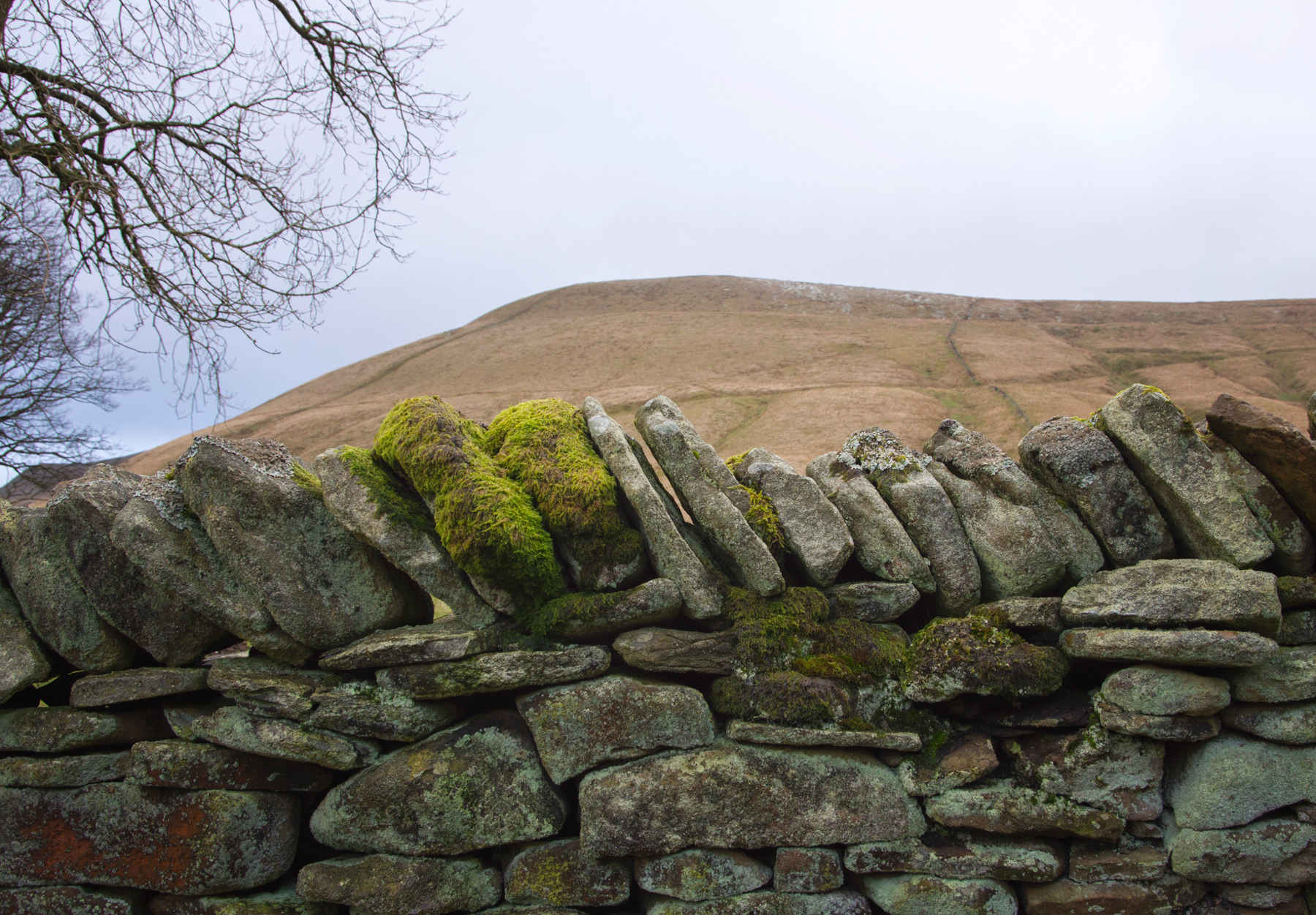 Moss covered wall stones