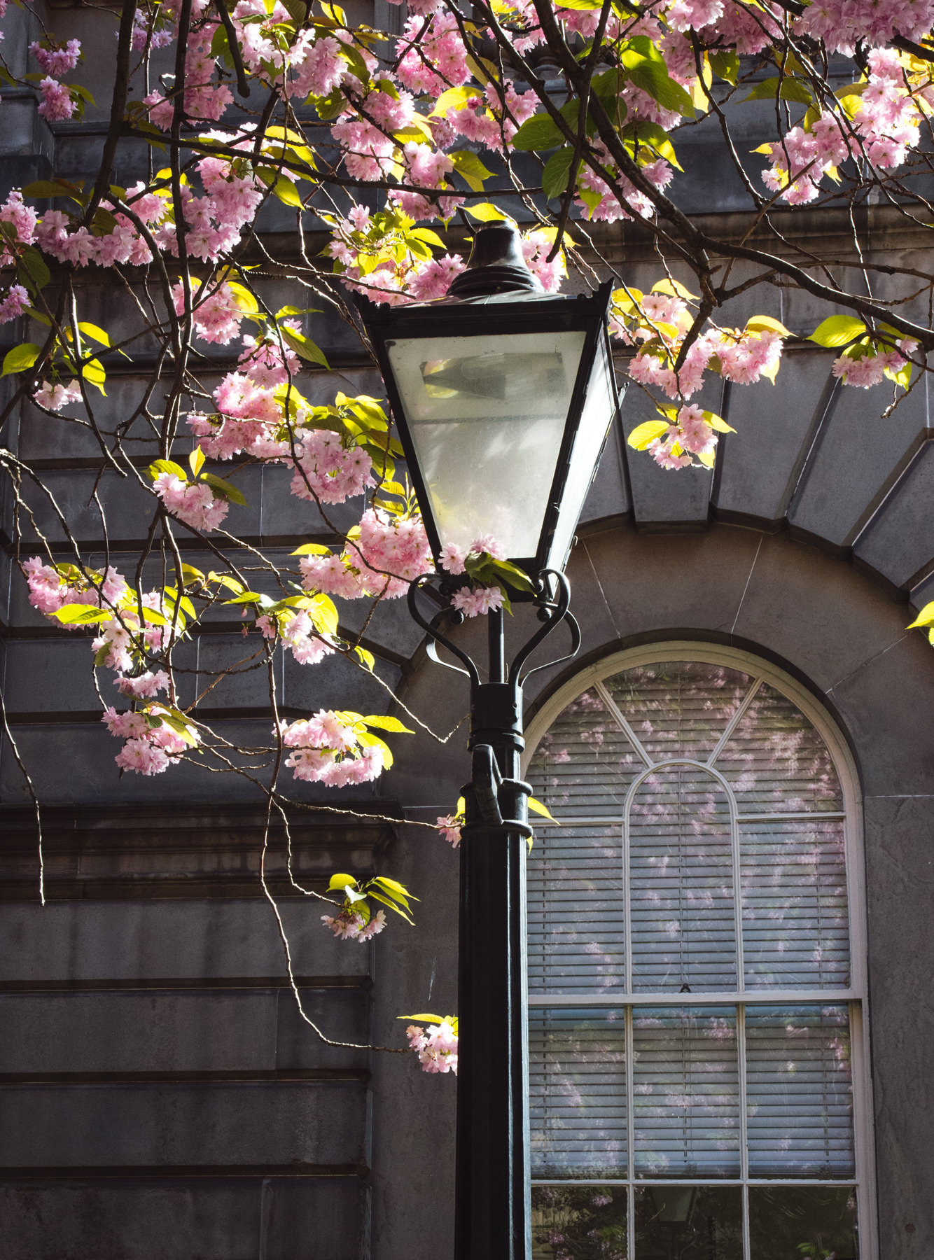 Iron lamppost and blossom