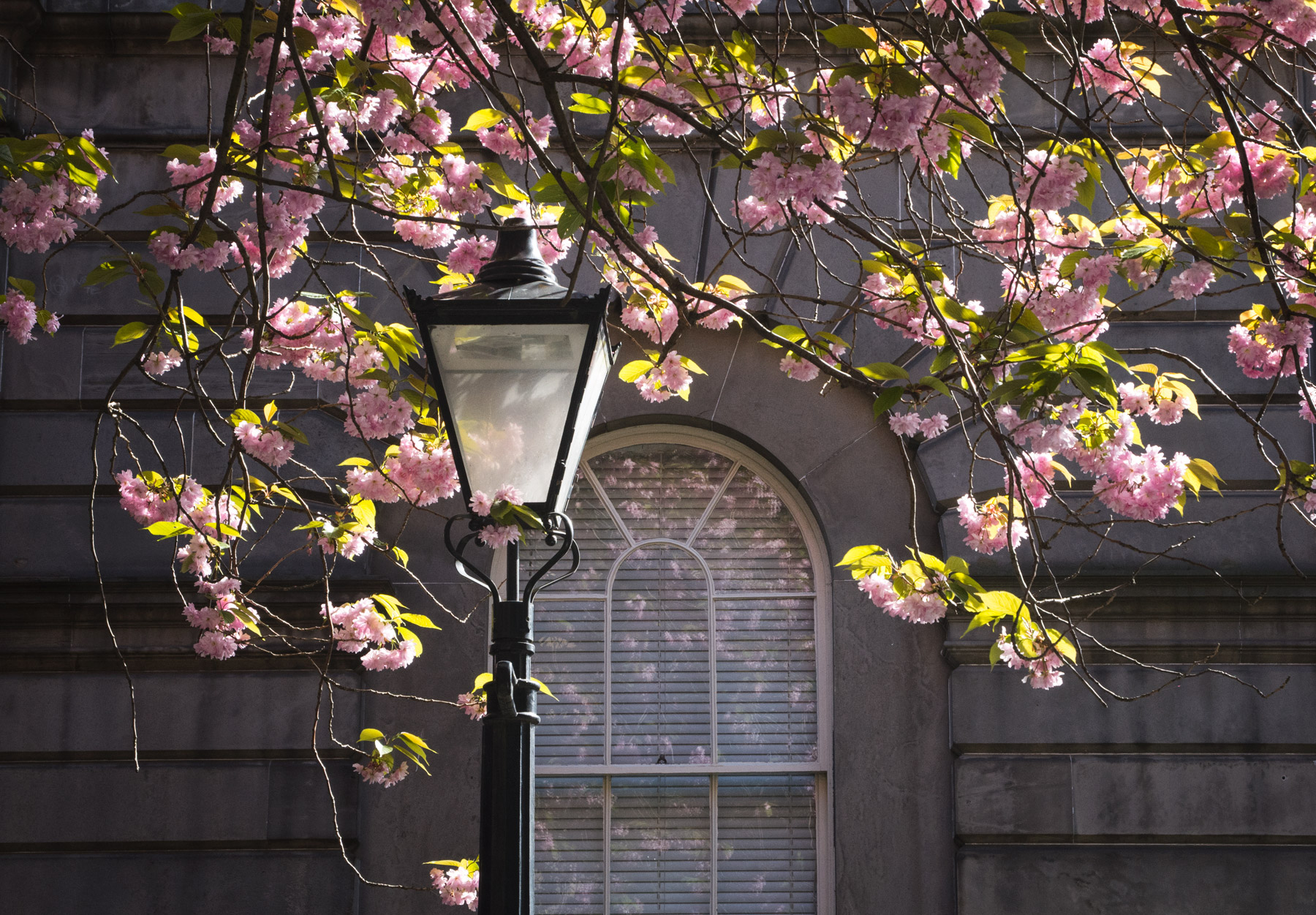 Lamp post in blossom
