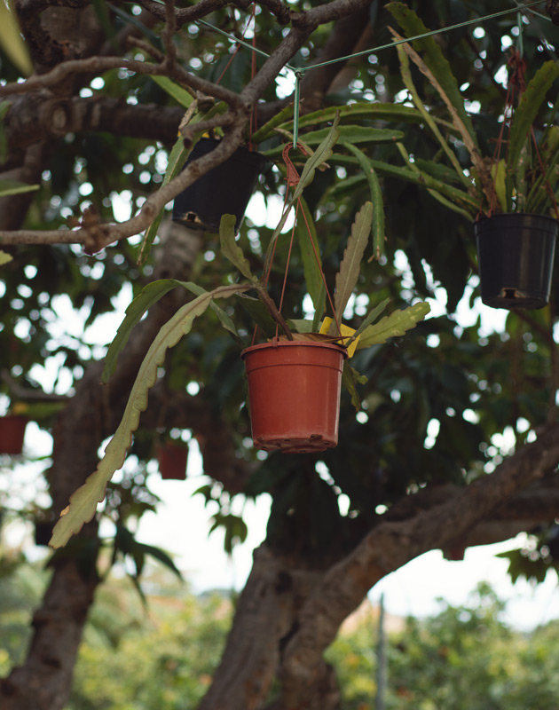 Plant pot hanging in tree