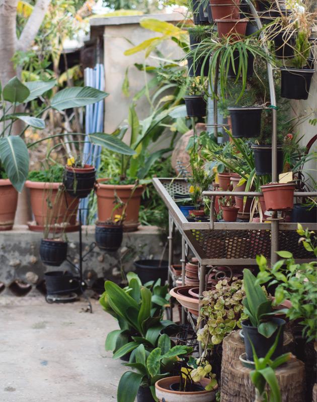 Potting area of garden