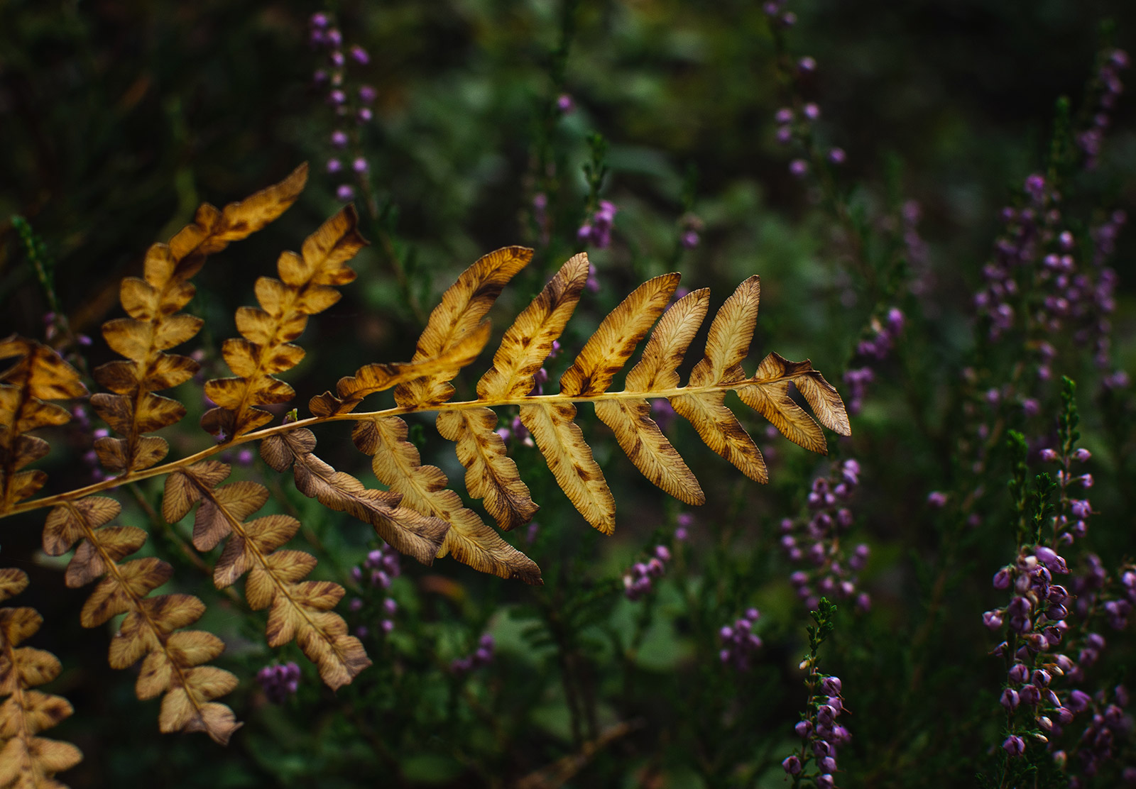 Golden fern leaves