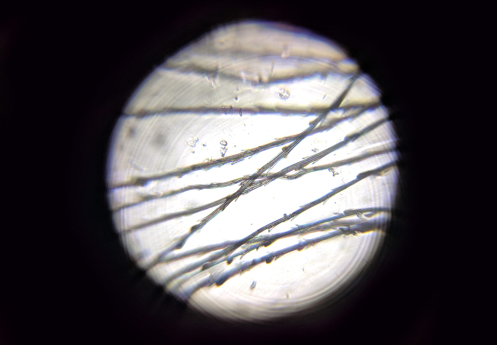 Dandelion seed under microscope