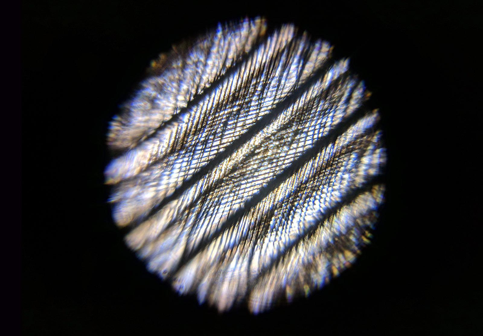 Feather fibres under microscope