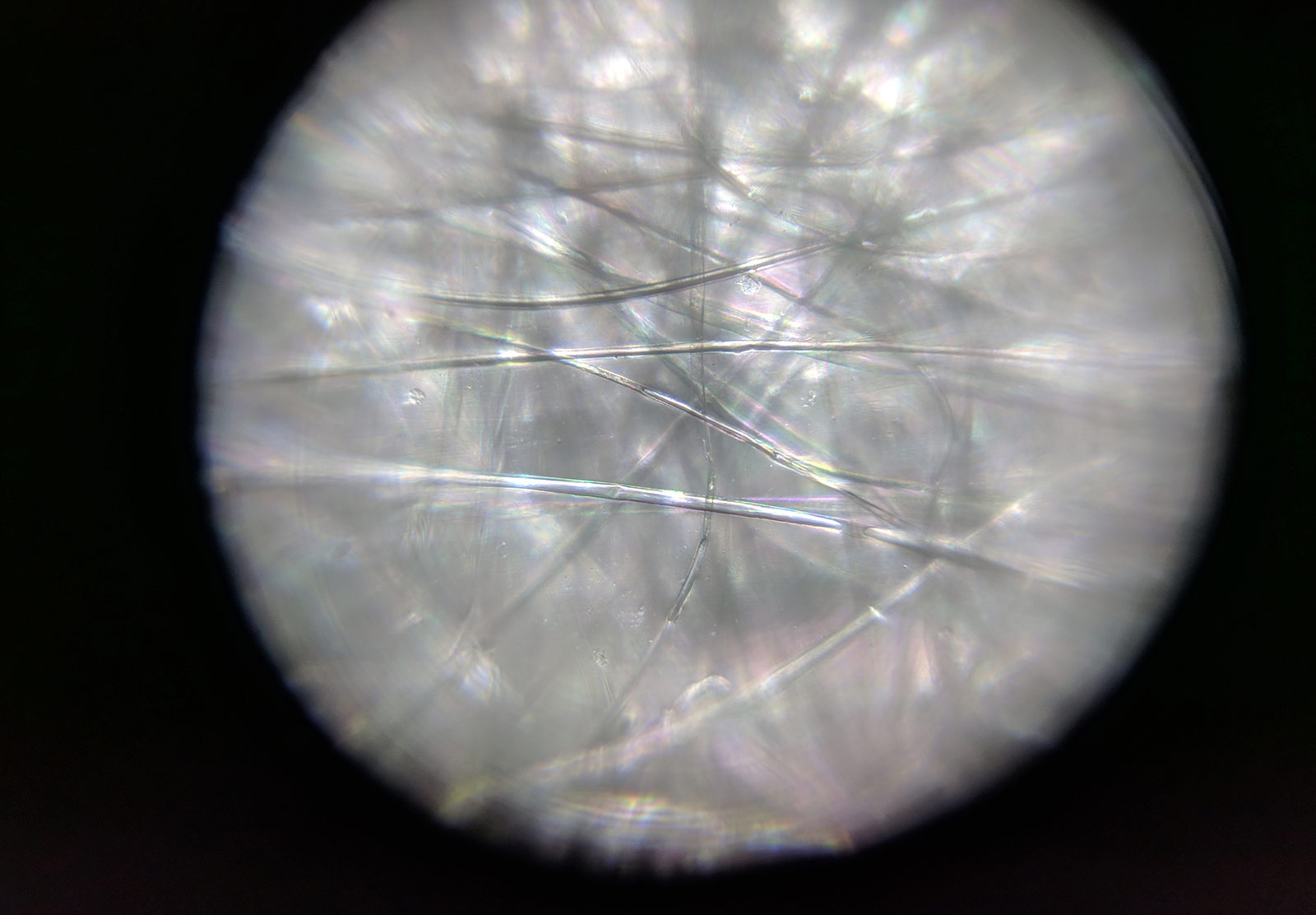Seed fibres under microscope
