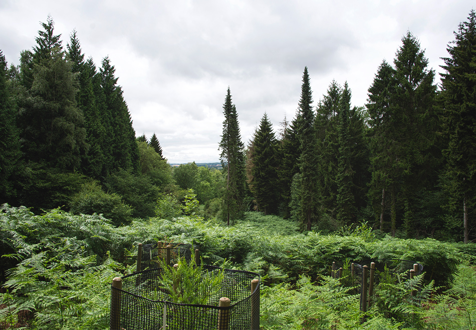View over trees and ferns