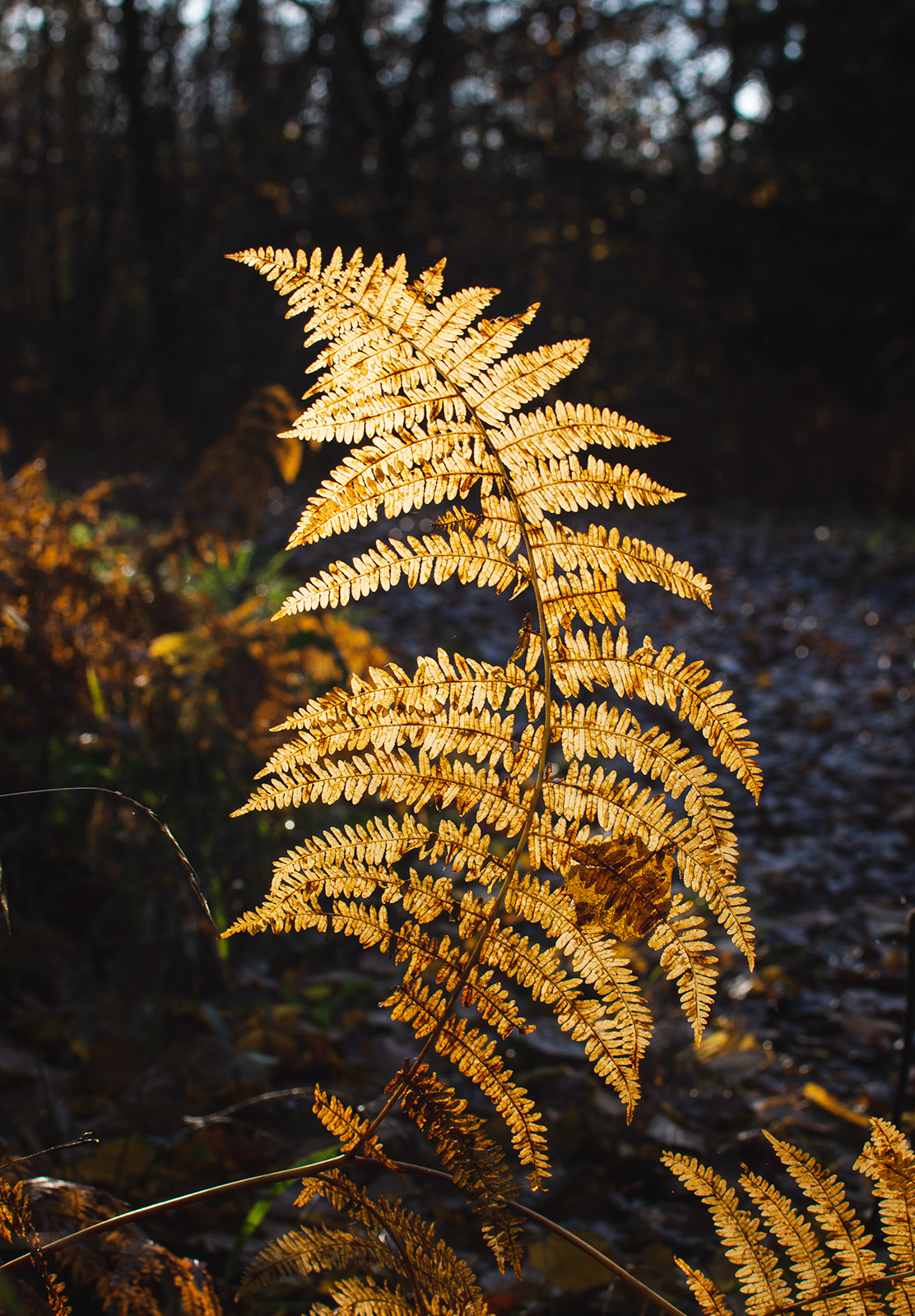 Light on yellow fern