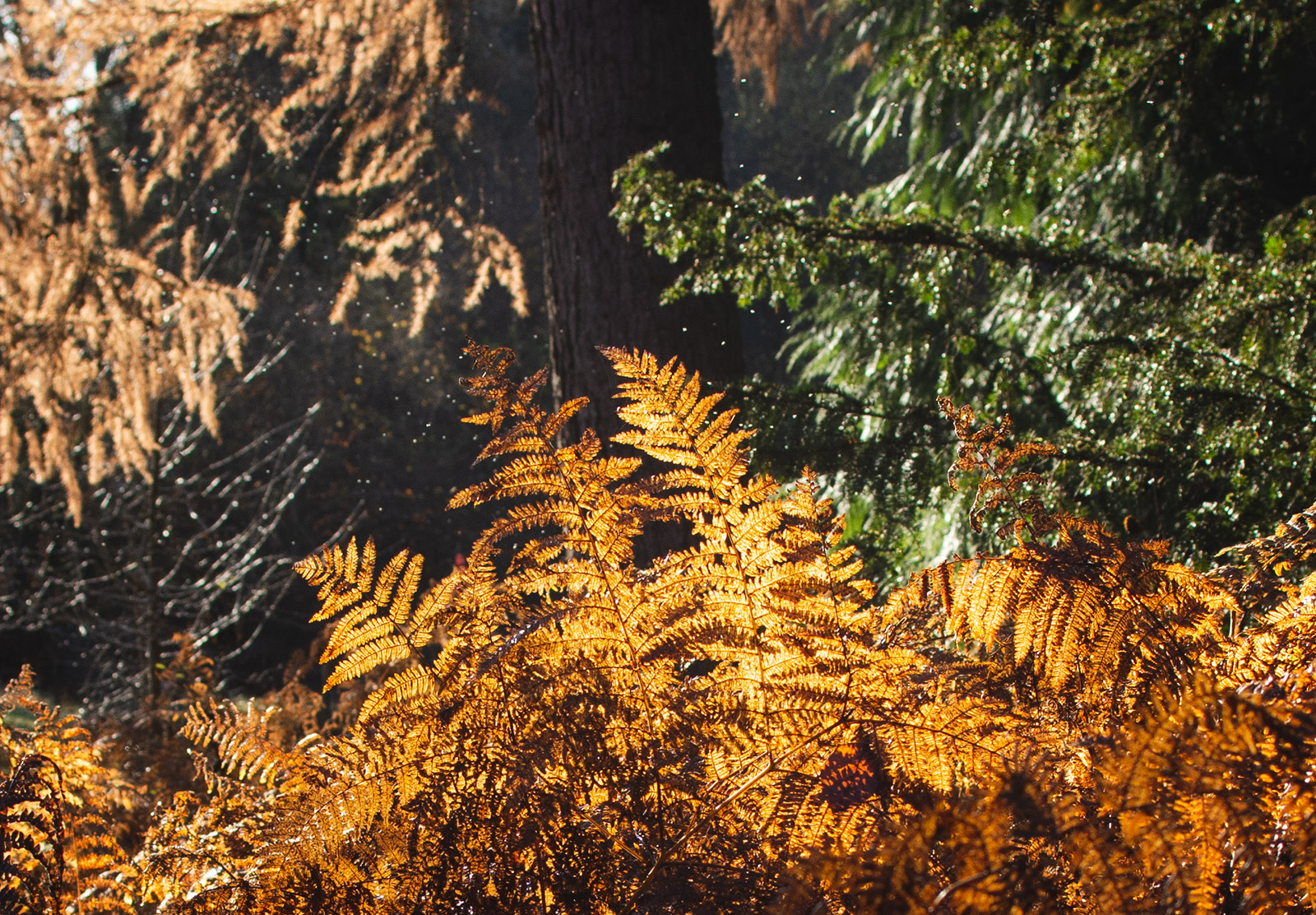 Orange ferns in the sun