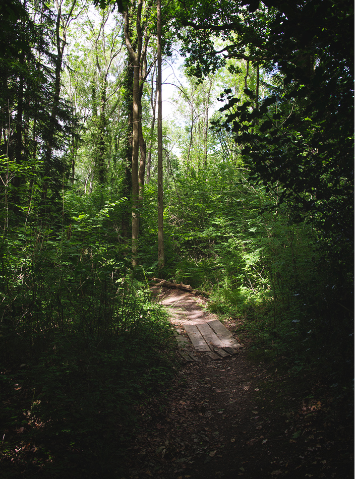 Shaded forest trail