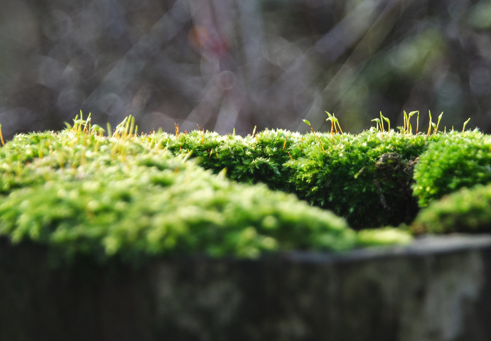 Moss growing on wood