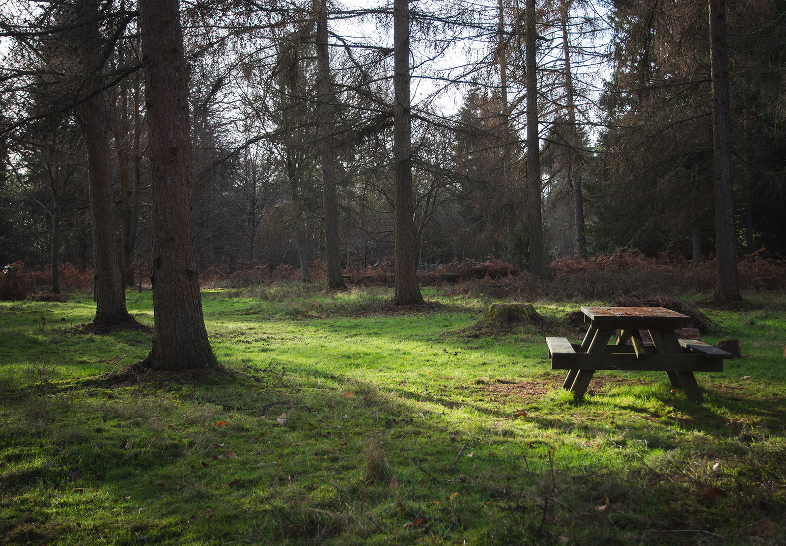 Picnic bench in the sun