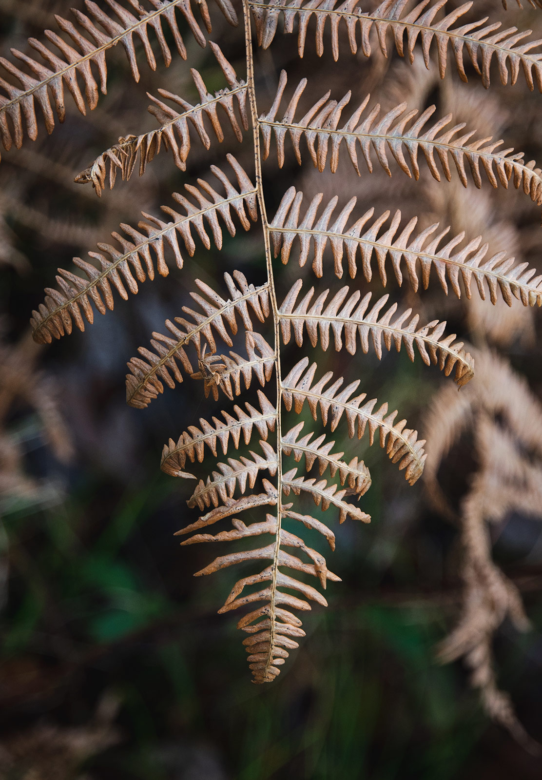 Closeup of orange fern