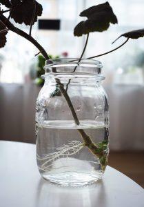 Roots growing in jar