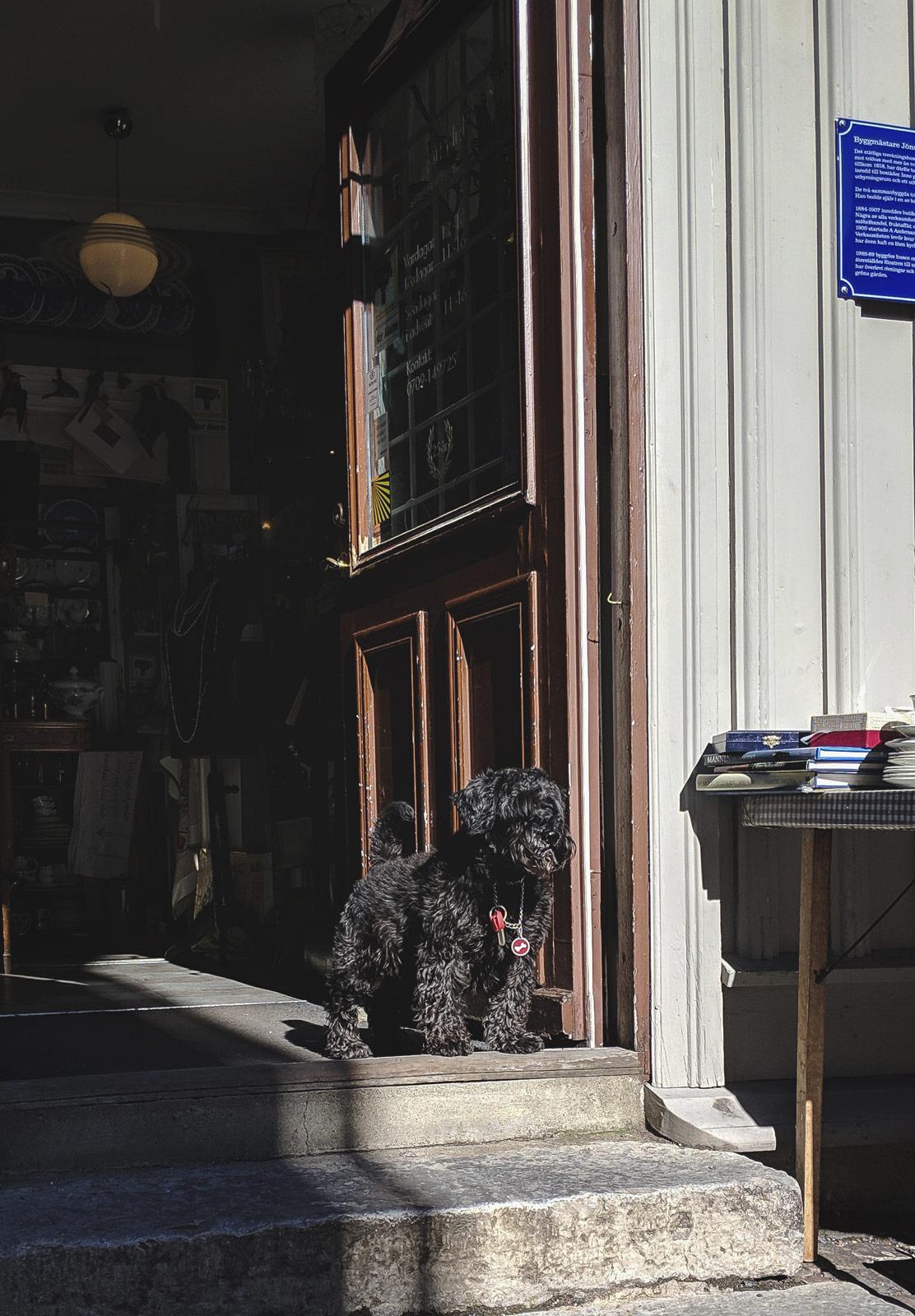 Dog in sunny doorway