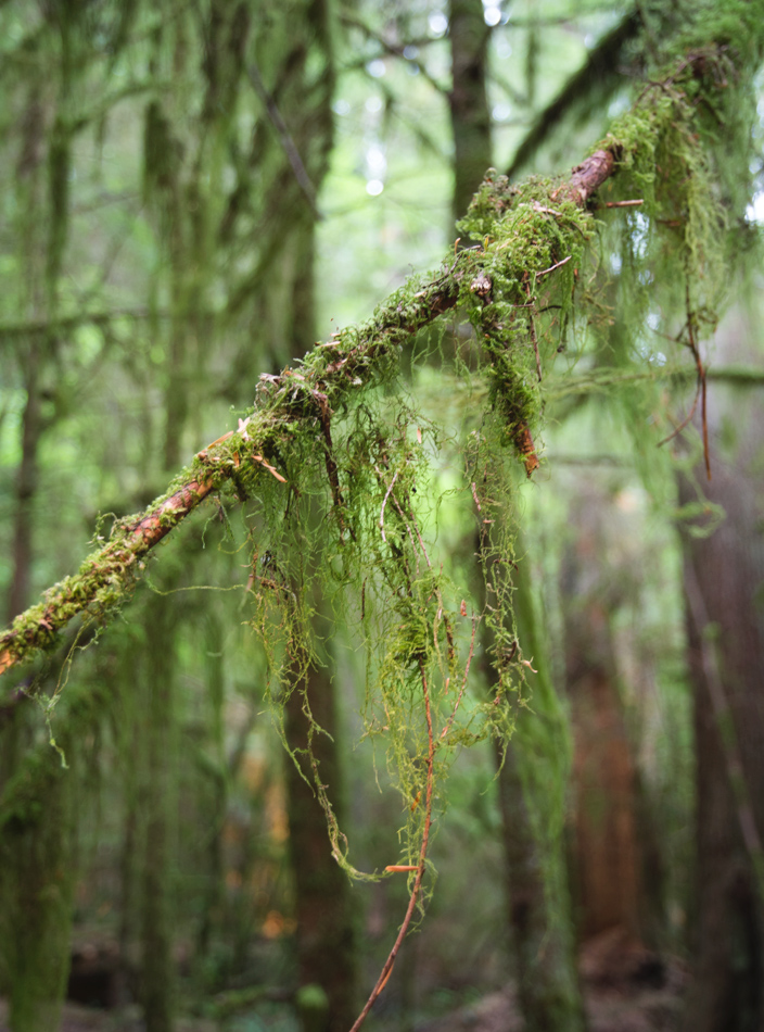 Moss hanging from tree branch