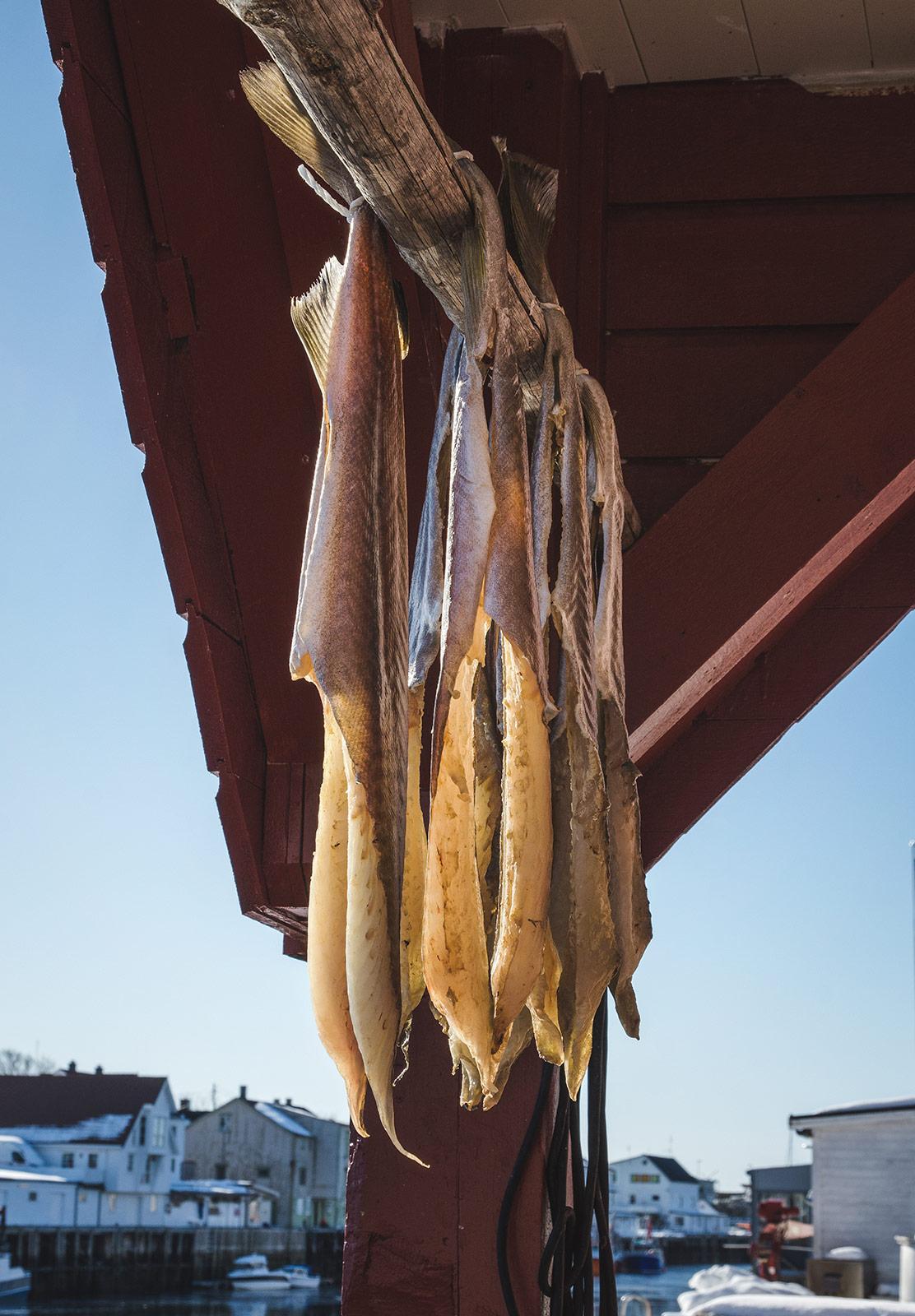 Hanging cod